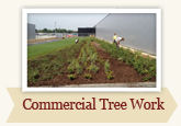 Commercial Treework by Local Tree Works