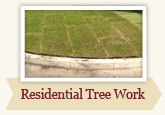 Residential Tree Care by Local Tree Works